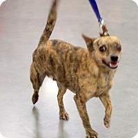 Adopt A Pet :: Gus - Concord, NC