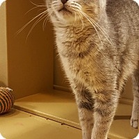 Adopt A Pet :: Missy (in CT) - Manchester, CT