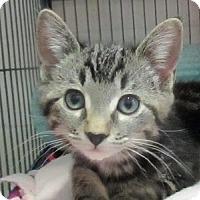 Adopt A Pet :: Peony - Lloydminster, AB