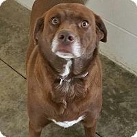 Adopt A Pet :: Reeses - Paducah, KY