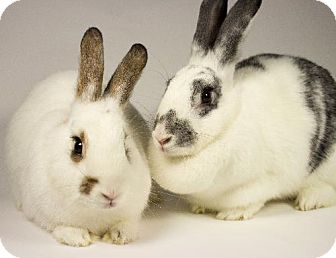 Other/Unknown for adoption in Kingston, Ontario - Summer & Ollie