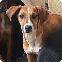 Adopt A Pet :: Sally - Charlotte, NC