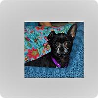 Adopt A Pet :: Gwen - Houston, TX