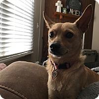 Adopt A Pet :: Sally - East Dover, VT