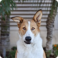 Adopt A Pet :: Luna - San Diego, CA
