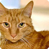 Adopt A Pet :: CHROME - Pittsburgh, PA
