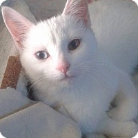 Adopt A Pet :: Mystique - THORNHILL, ON