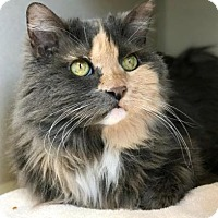 Adopt A Pet :: Meeka - Denver, CO