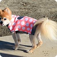 Adopt A Pet :: Mandy - Gardnerville, NV