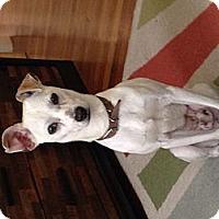 Adopt A Pet :: Bulgari - Orange, CA