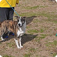 Adopt A Pet :: Lady - Conyers, GA