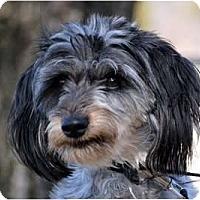 Adopt A Pet :: Valentine weenie-poo! - Providence, RI