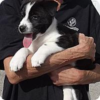 Adopt A Pet :: Lulu - Allentown, PA