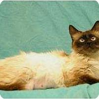 Adopt A Pet :: Mai Tai - Sacramento, CA