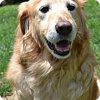 Adopt A Pet :: Tyson - Salem, NH