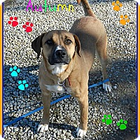 Adopt A Pet :: Autumn - Lawrenceburg, TN