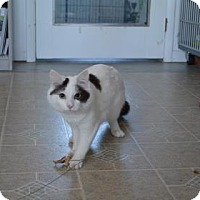 Adopt A Pet :: Tomah - Fort Collins, CO
