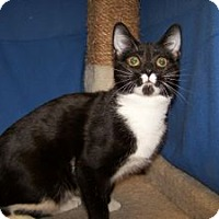 Adopt A Pet :: K-Ts5-Talulah - Colorado Springs, CO