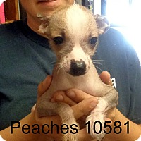 Adopt A Pet :: Peaches - baltimore, MD
