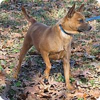Adopt A Pet :: Buster Brown - Hartford, CT