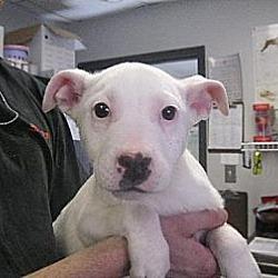 Photo 3 - Labrador Retriever Mix Dog for adoption in Manning, South Carolina - Andrea