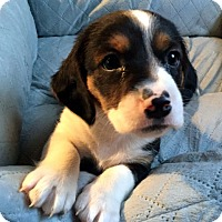 Adopt A Pet :: EASTON - ADOPTION PENDING! - Pennsville, NJ