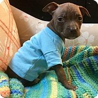 Adopt A Pet :: San Diego Chargers - Phoenix, AZ