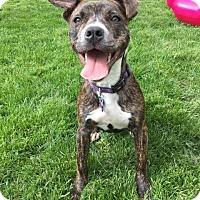 Adopt A Pet :: Mariah aka Penny - Garden City, MI