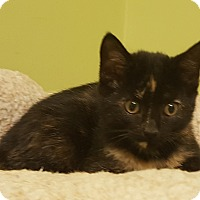 Adopt A Pet :: Rosie - Circleville, OH