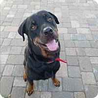 Adopt A Pet :: Goliath - New Smyrna Beach, FL