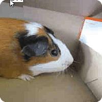 Adopt A Pet :: *Urgent* Deke - Fullerton, CA
