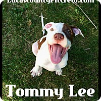 Adopt A Pet :: Tommy Lee - Toledo, OH