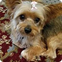 Adopt A Pet :: Sujung - Fairfax, VA