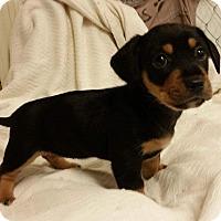 Adopt A Pet :: Bristol - Joliet, IL