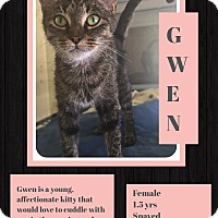 Domestic Shorthair Cat for adoption in CLEVELAND, Ohio - Gwen