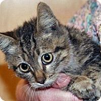 Adopt A Pet :: Kevin - Wildomar, CA