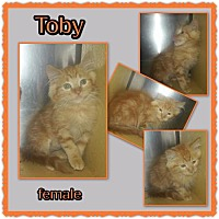 Adopt A Pet :: Toby - Richmond, CA