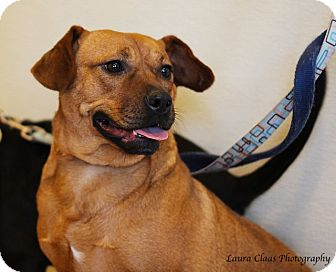 Pug/Beagle Mix Dog for adoption in Oak Ridge, New Jersey - Willow-LOVES DOGS!
