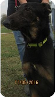 German Shepherd Dog Mix Dog for adoption in Von Ormy, Texas - Chloe