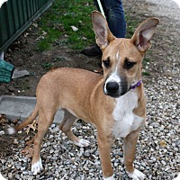 Terrier (Unknown Type, Small) Mix Dog for adoption in Fort Madison, Iowa - Etta