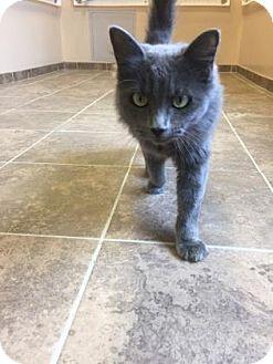 Domestic Longhair Cat for adoption in Cumming, Georgia - Melanie