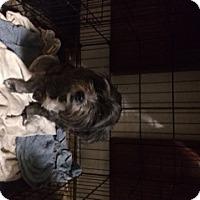 Adopt A Pet :: Lucy Mae - Stafford, VA