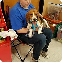 Adopt A Pet :: Calvin - Cincinnati, OH