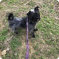 Adopt A Pet :: Scruffles - Jackson, MS