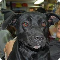 Adopt A Pet :: Jada - Brooklyn, NY