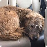 Adopt A Pet :: Finn - Ottawa, ON