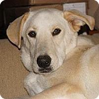 Adopt A Pet :: Spanky - Holly Springs, NC