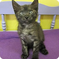 Adopt A Pet :: Shikira - Mobile, AL