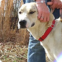 Adopt A Pet :: Magu - Fort Valley, GA