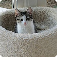 Adopt A Pet :: Slippers - Jeffersonville, IN